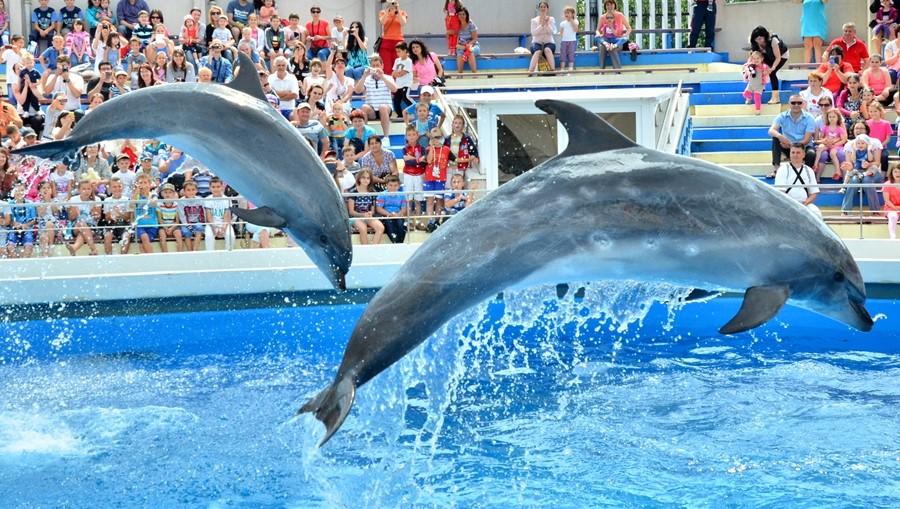 delfini (11)