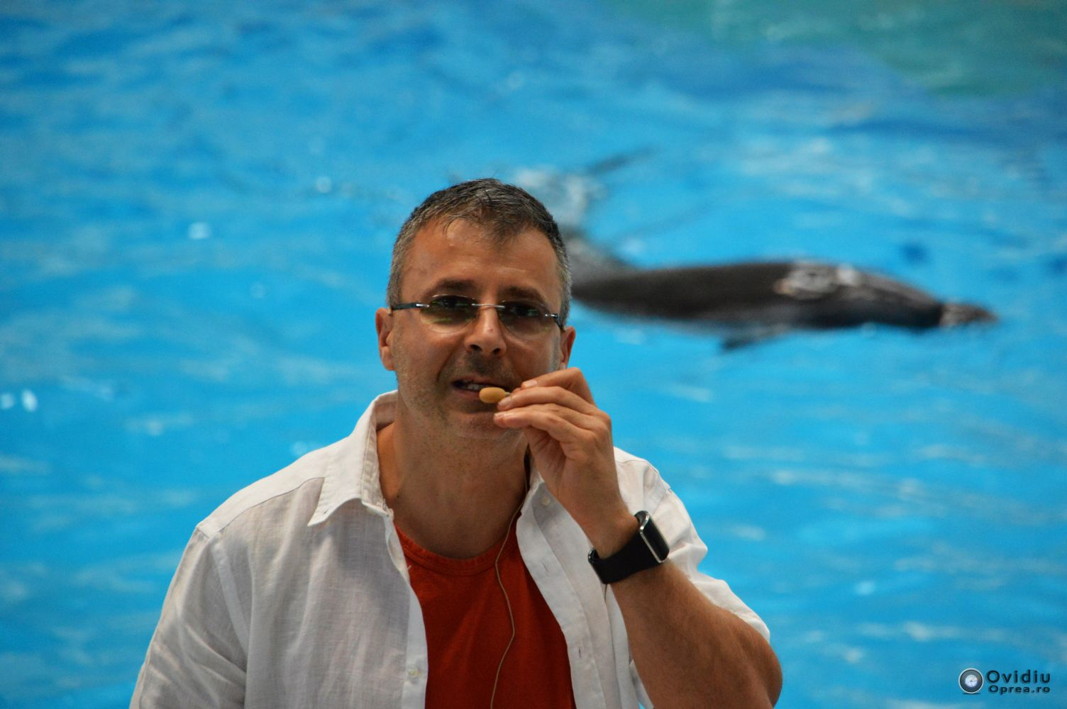 Adrian Bilba, director CMS, tariful de intrare la delfinariu