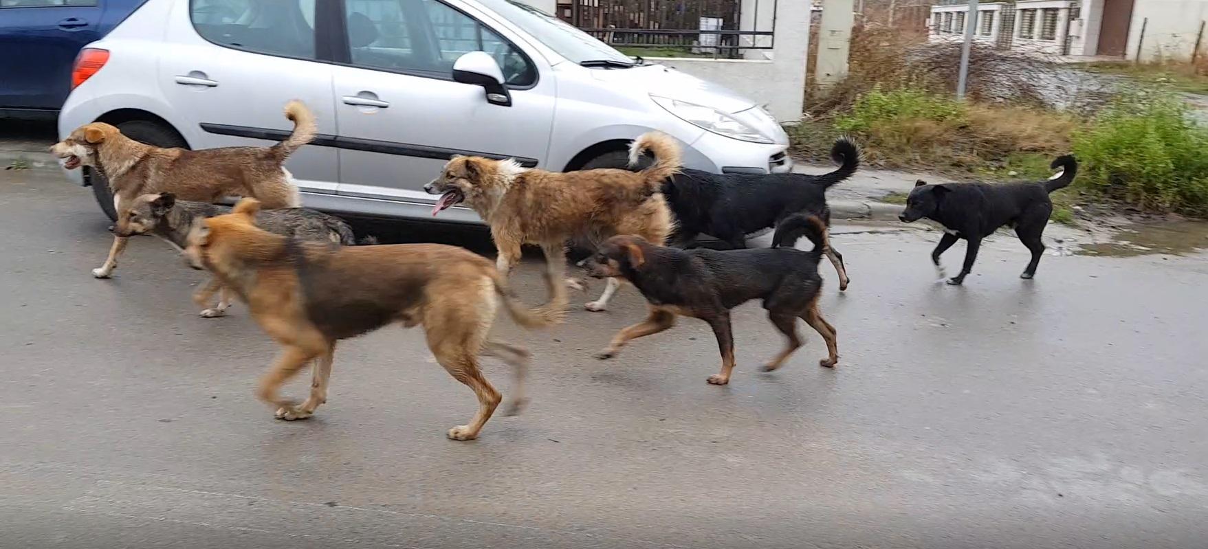 usr câini fără stăpân constanța