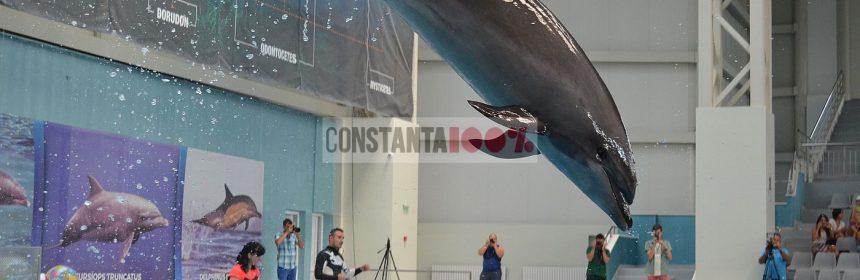 delfinariu, delfin