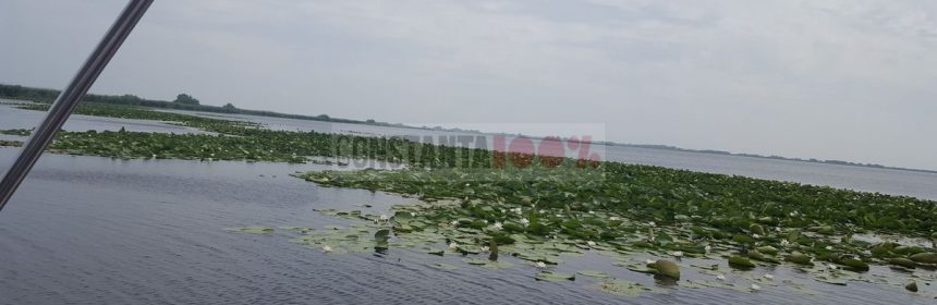 Delta Dunarii nuferi