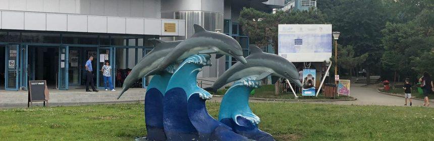 statuie delfinariu