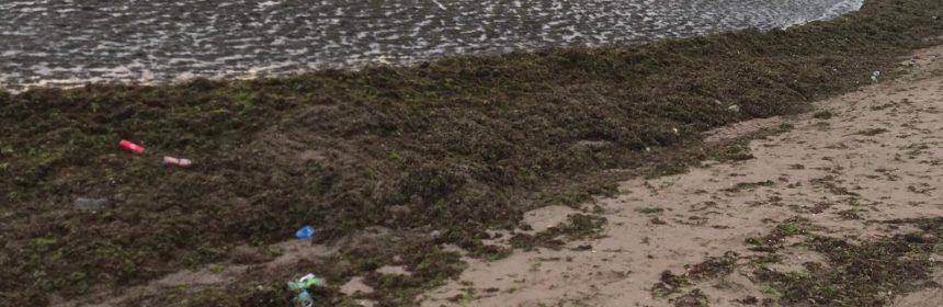 alge litoral abadl