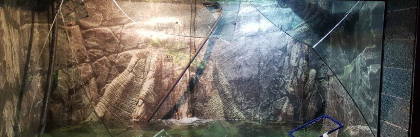 geam spart acvariu