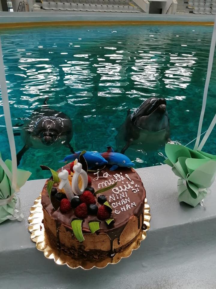 Pe 29 mai s-au împlinit 10 ani de când Chen Chen și Ni Ni au ajuns de la Aquarium Beijing la Delfinariu Constanța.