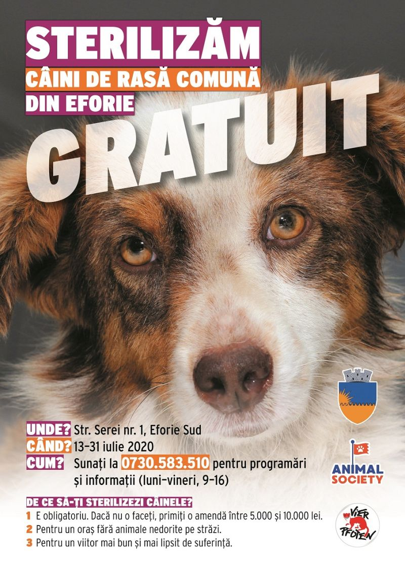 Campanie de sterilizare gratuită a câinilor de rasă comună din Eforie