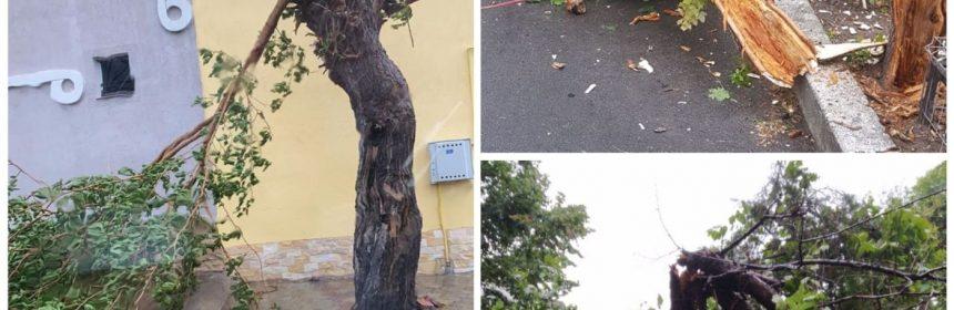 copaci rupti constanta