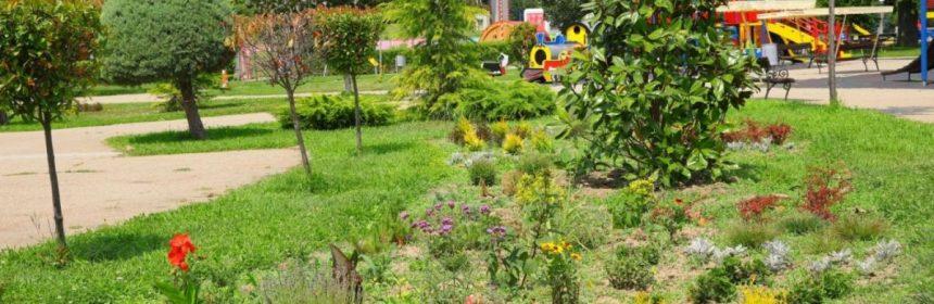 plantare tara piticilor