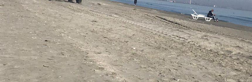 masini pe plaja din mamaia