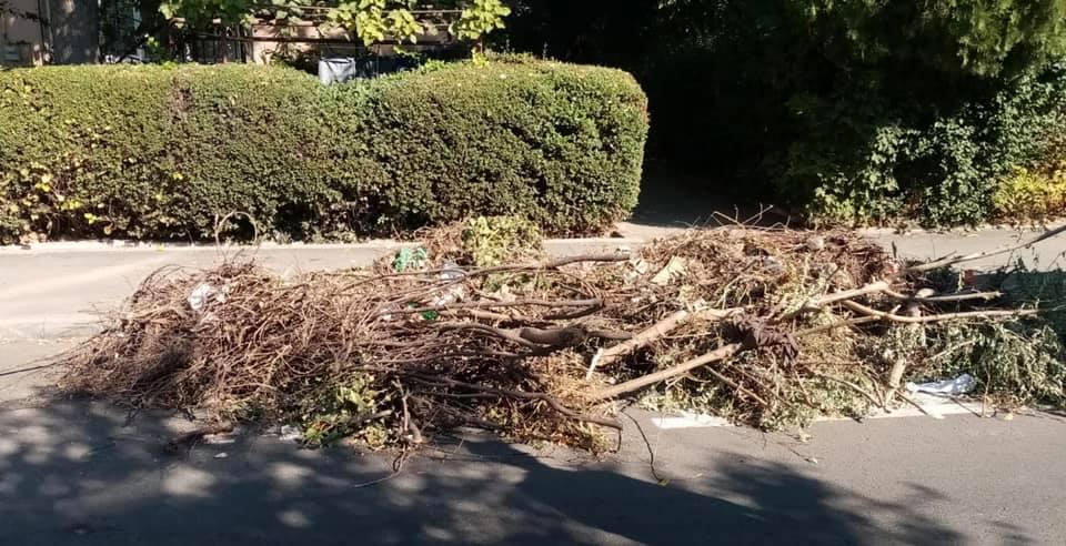 Serviciul de colectare și transport a deșeurilor vegetale nu este asigurat de Polaris în municipiul Constanța.