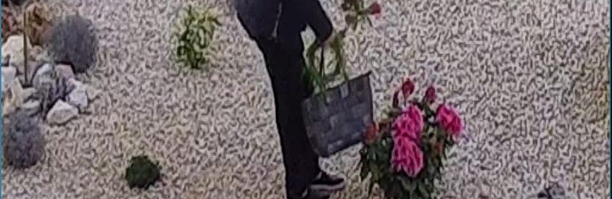 furt flori