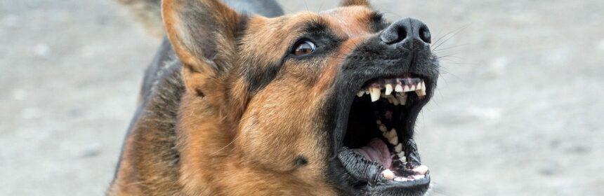 Vergil Chițac s-a metamorfozat: nu am mai putut vorbi cu el direct, și-a asmuțit câinii de pază, Horia Constantinescu și Felicia Ovanesian să latre la noi
